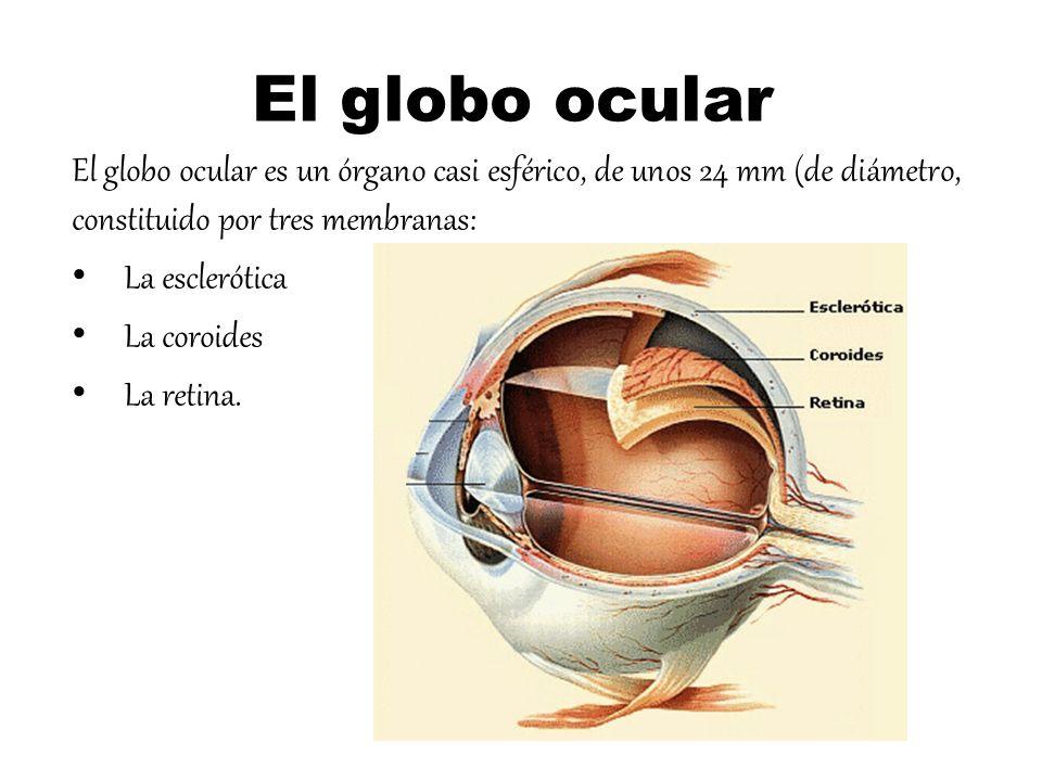 Excelente Vista De órganos Friso - Anatomía de Las Imágenesdel ...