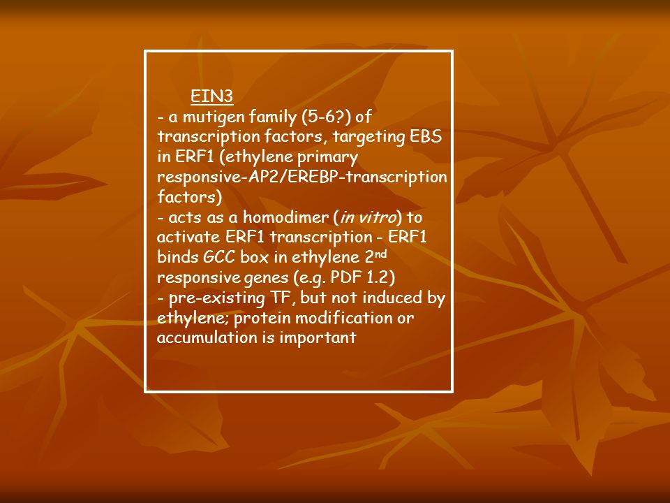 EIN3 - a mutigen family (5-6 ) of transcription factors, targeting EBS in ERF1 (ethylene primary responsive-AP2/EREBP-transcription factors)