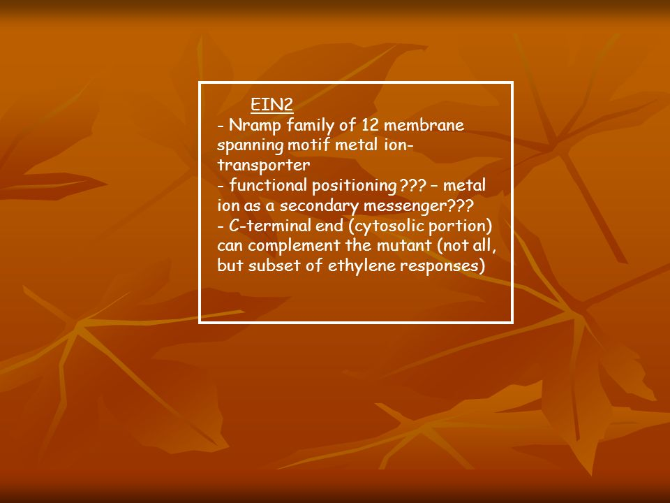 EIN2 - Nramp family of 12 membrane spanning motif metal ion-transporter. - functional positioning – metal ion as a secondary messenger