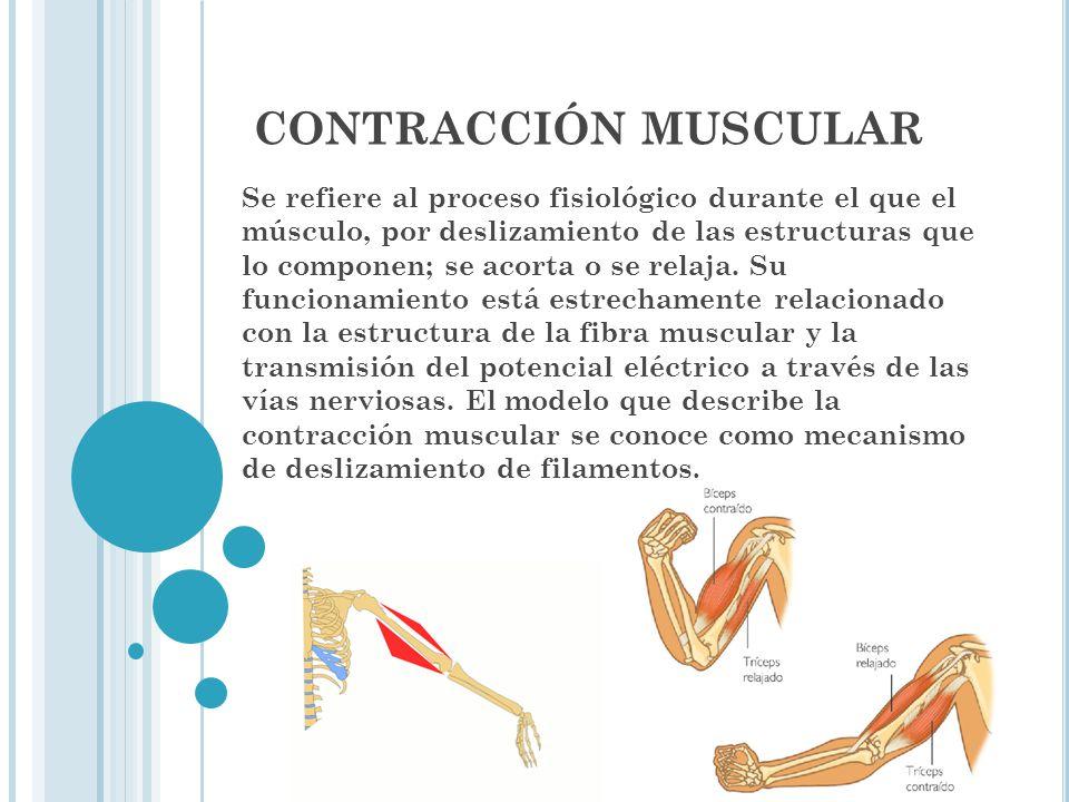Contracción Muscular Orlando De León Guerra Mariana Moreno