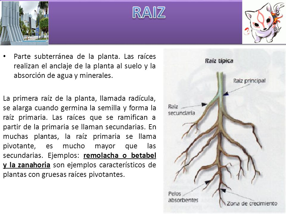 Tema: 1.-raiz. 2.-tallo. 3.-hoja. 4.-Flor. - ppt video online descargar