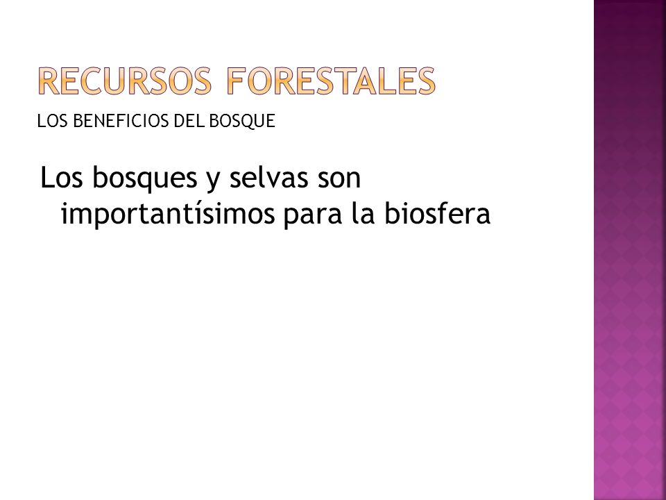 Recursos forestales LOS BENEFICIOS DEL BOSQUE.