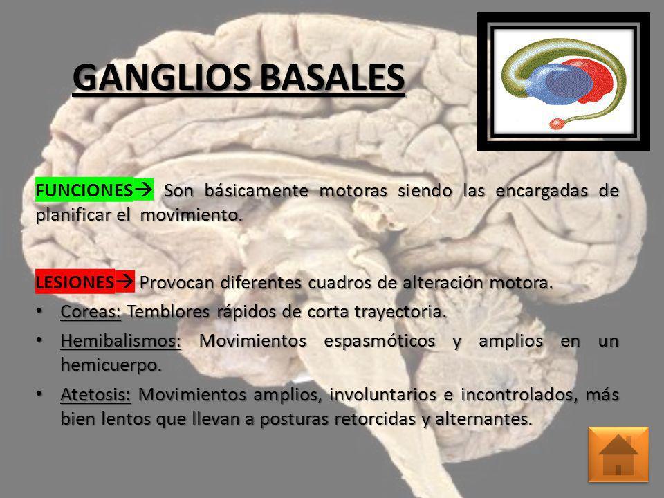 ENCÉFALO GANGLIOS BASALES NEURONAS TALAMO CORTEZA CEREBRAL - ppt ...
