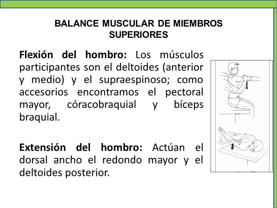 Increíble Músculos De Los Hombros Superiores Viñeta - Imágenes de ...