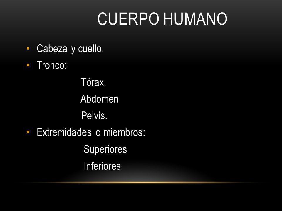 UNIDAD 1 GENERALIDADES DE LA ANATOMÍA HUMANA Y OSTEOLOGÍA - ppt ...