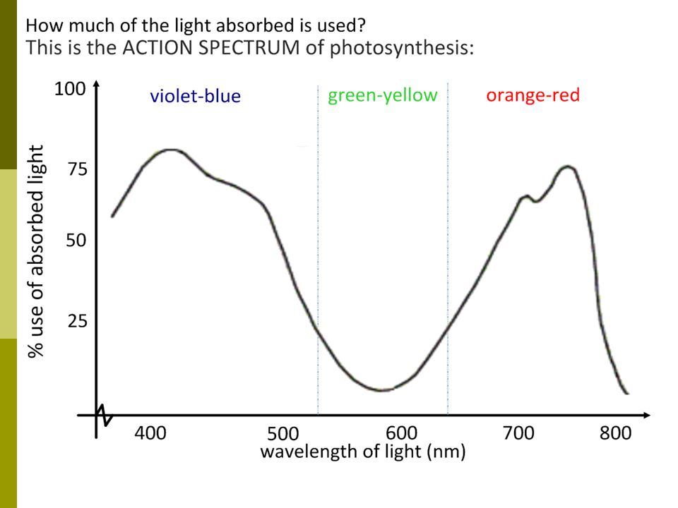 Action spectrum of photosynthesis shows wavelengths used for light dependent reactions.
