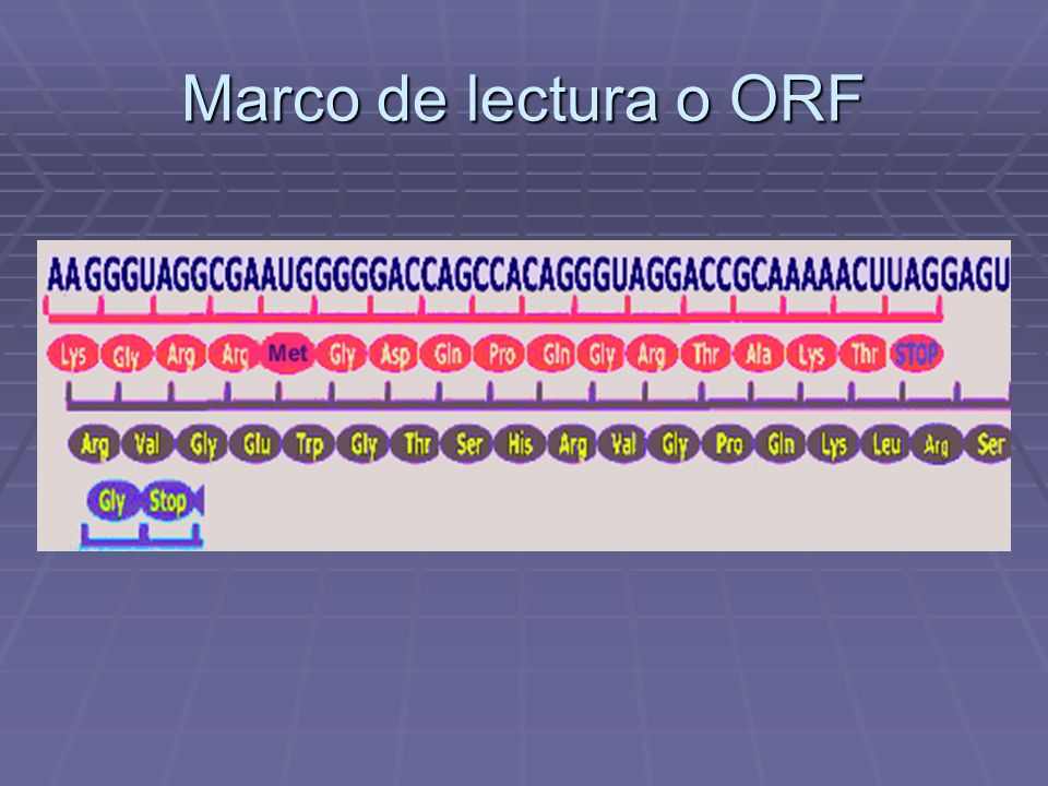 Traducción de proteínas Mutaciones de Punto - ppt descargar