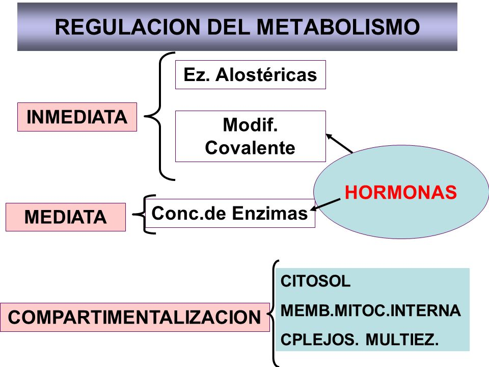 REGULACION DEL METABOLISMO