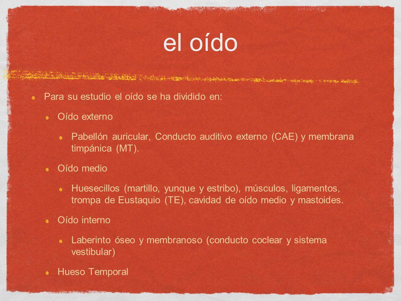 El oído Fundamentos de Anatomía DR. CARLOS A. ESTRADA TRISTÁN - ppt ...