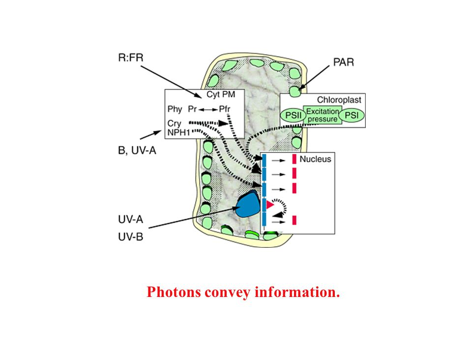 Photons convey information.