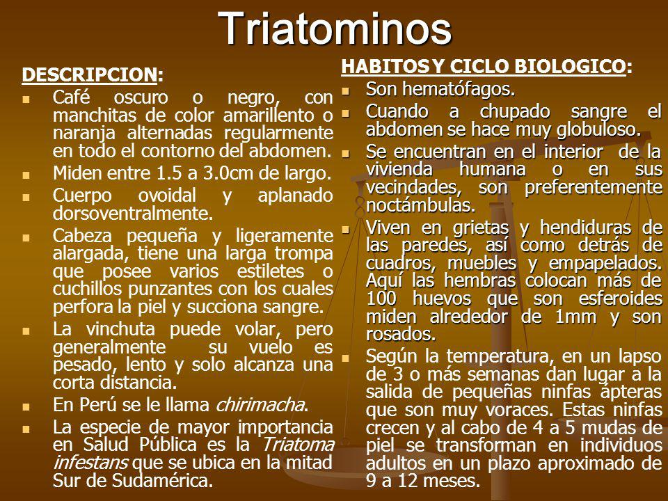 Triatominos HABITOS Y CICLO BIOLOGICO: DESCRIPCION: Son hematófagos.