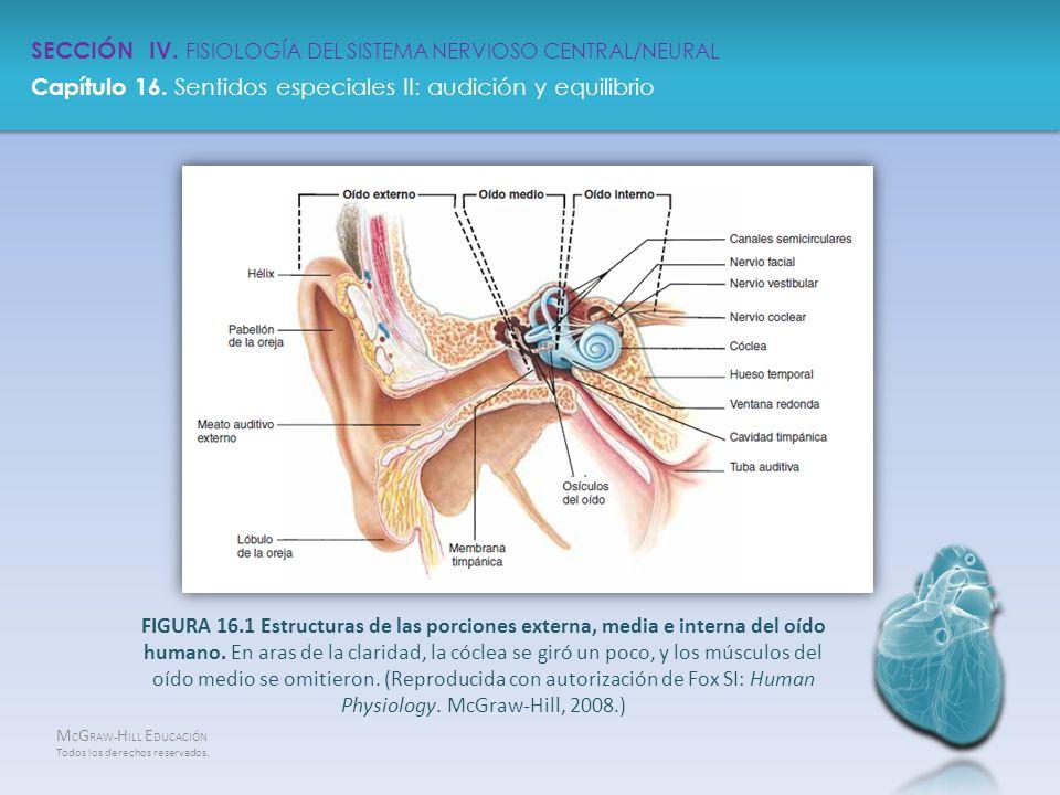 Sección Iv Fisiología Del Sistemanervioso Central Neural