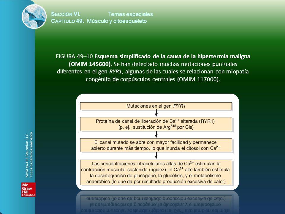 SECCIÓN VI Temas especiales - ppt descargar