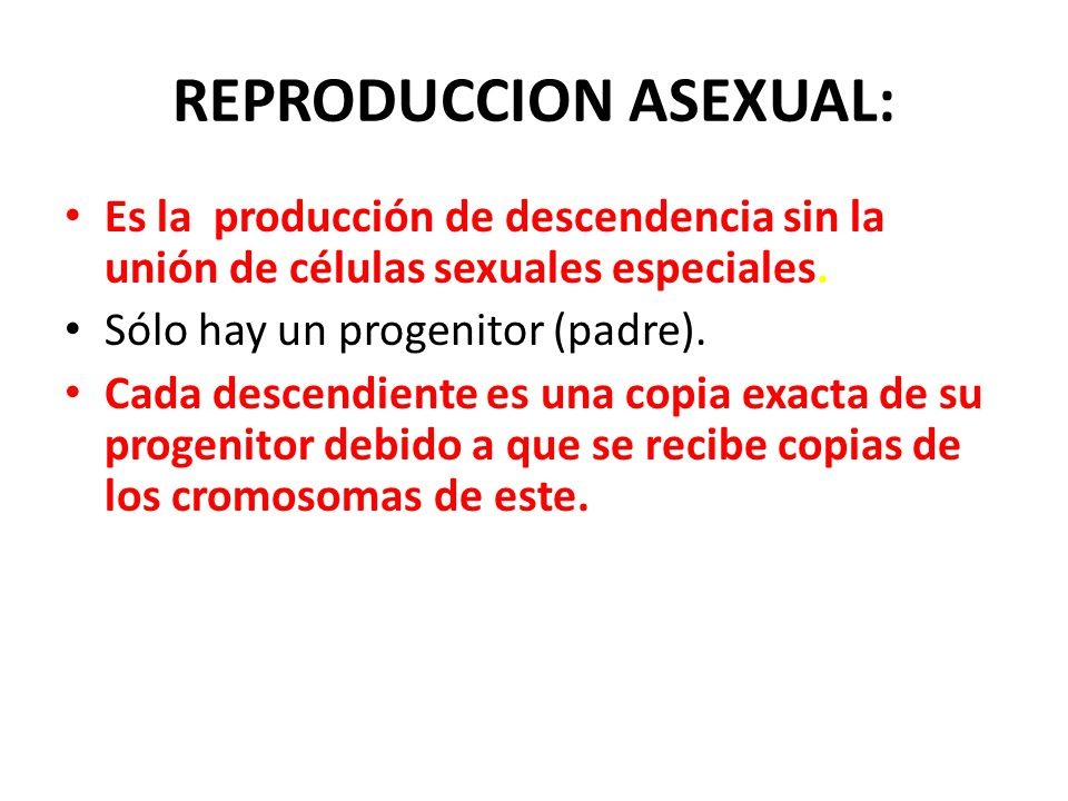 REPRODUCCION ASEXUAL:
