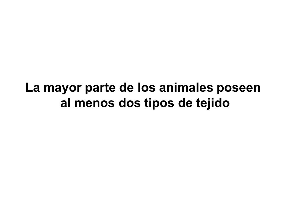 La mayor parte de los animales poseen