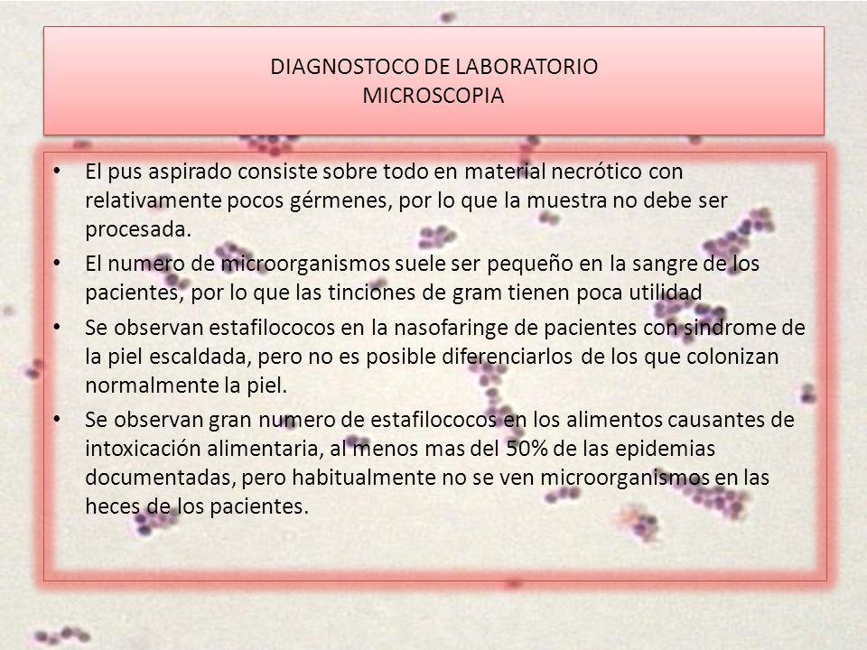 DIAGNOSTOCO DE LABORATORIO MICROSCOPIA