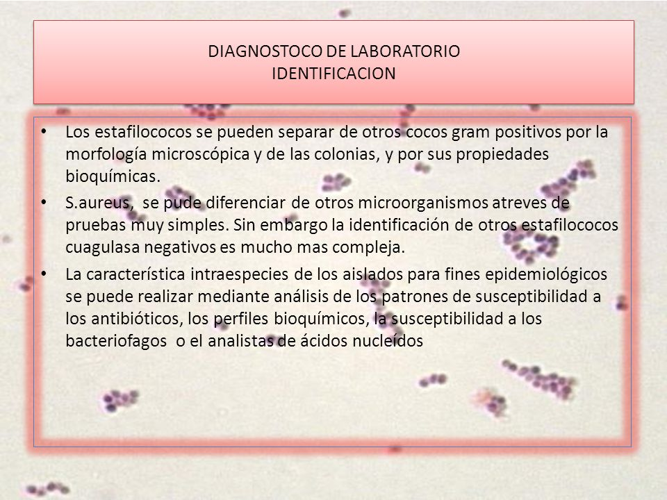 DIAGNOSTOCO DE LABORATORIO IDENTIFICACION