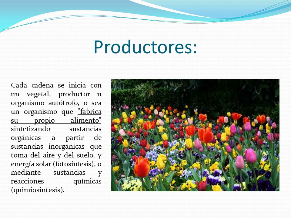 Productores: