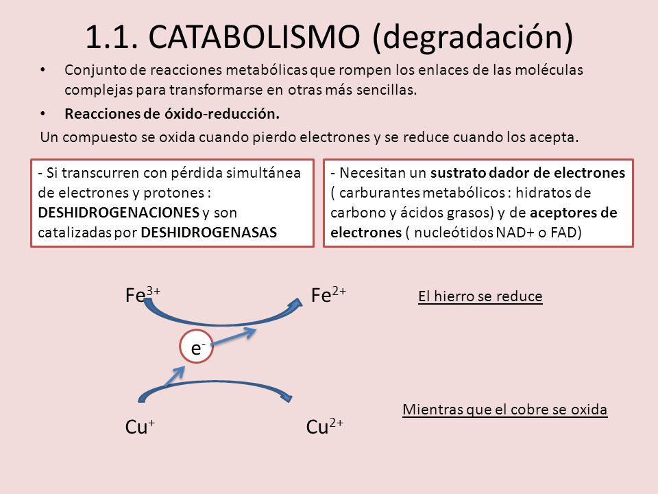 1.1. CATABOLISMO (degradación)
