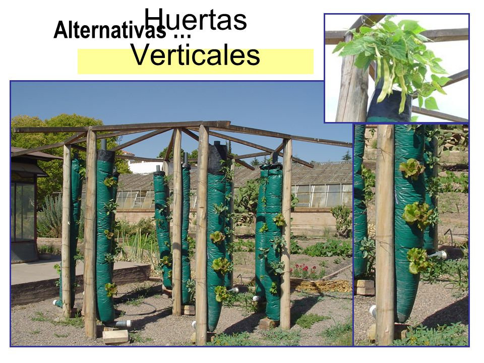 Alternativas … Huertas Verticales