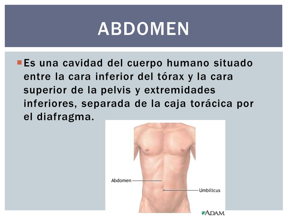 Flancos abdominales Docente: DANIEL MELLA. - ppt descargar