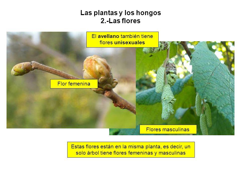 Las Plantas Y Los Hongos Creditos Ppt Descargar