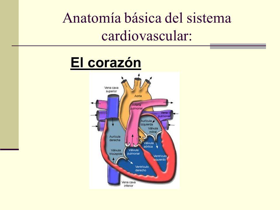 Fisiología CARDIOVASCULAR - ppt video online descargar