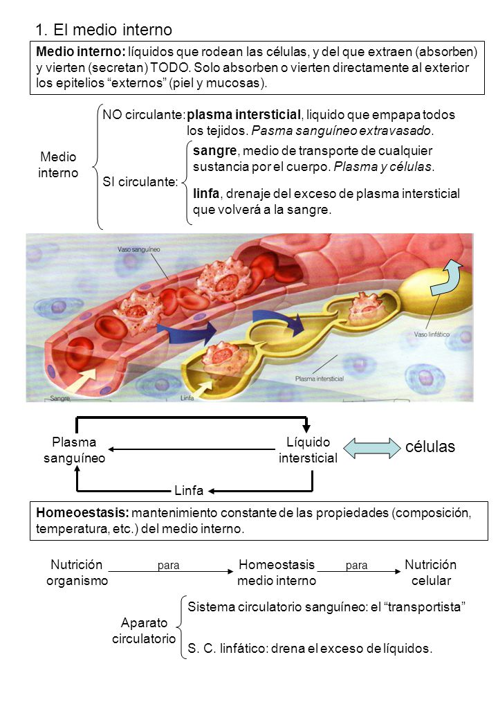 Homeostasis medio interno