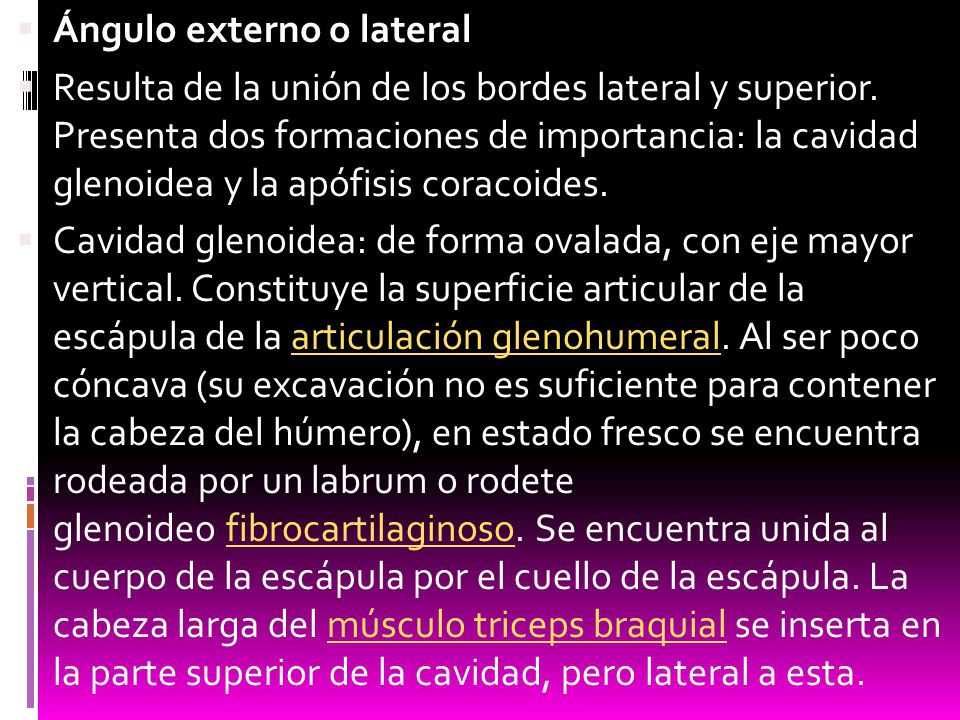 Ángulo externo o lateral