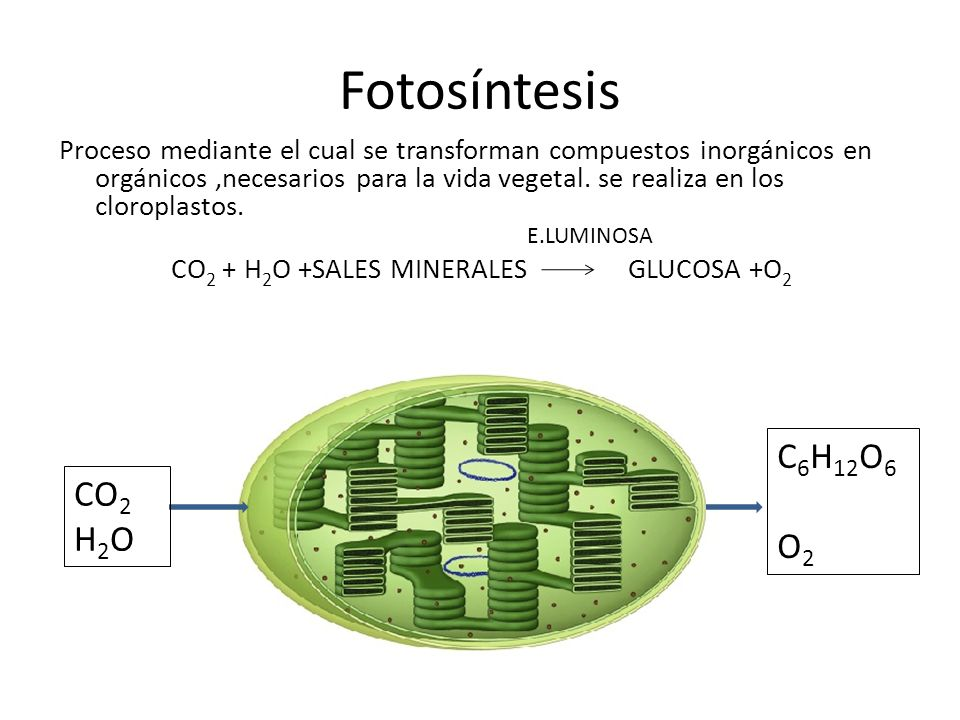 Fotosíntesis C6H12O6 CO2 O2 H2O