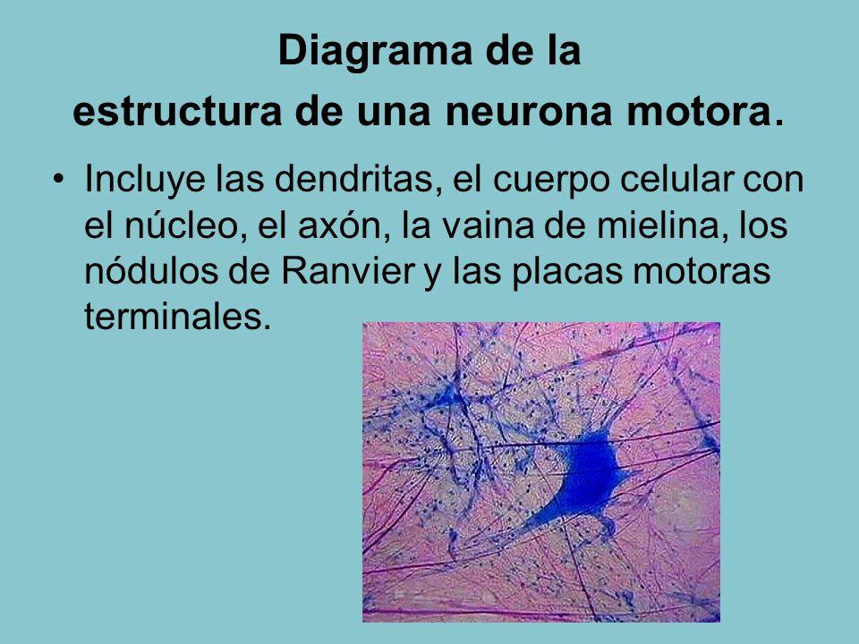 6.5 Nervios, hormonas y homeostasis - ppt descargar