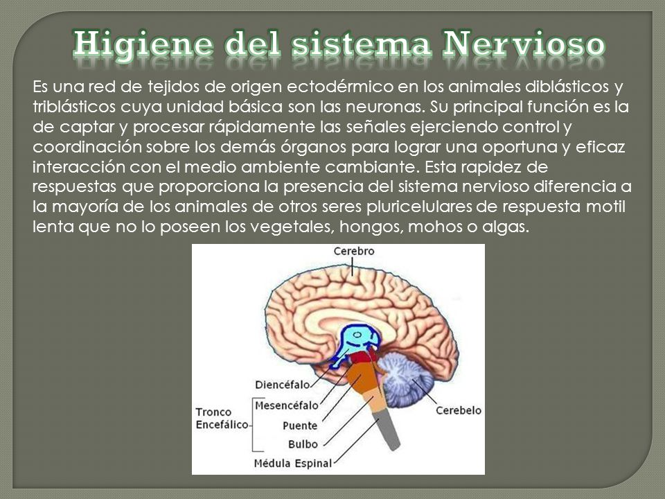 Higiene Del Sistema Respiratorio: Melissa Portilla Sangabriel