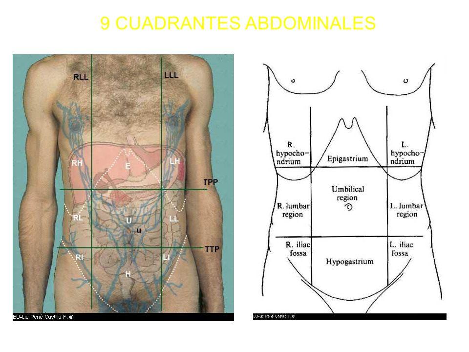 Encantador Anatomía Cuadrante Abdominal Ilustración - Imágenes de ...