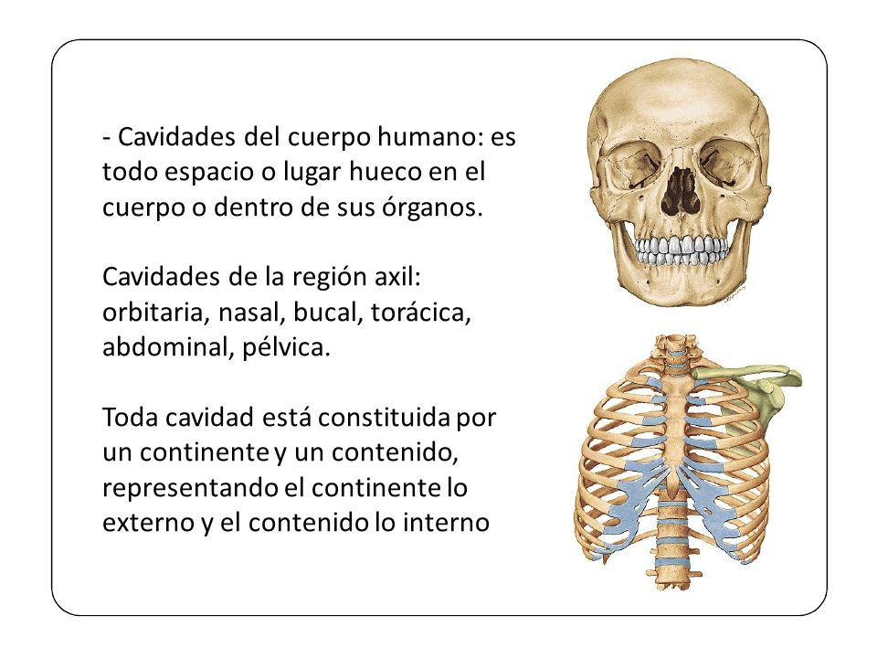 Excepcional Imagen De Los órganos Del Cuerpo Dentro Embellecimiento ...