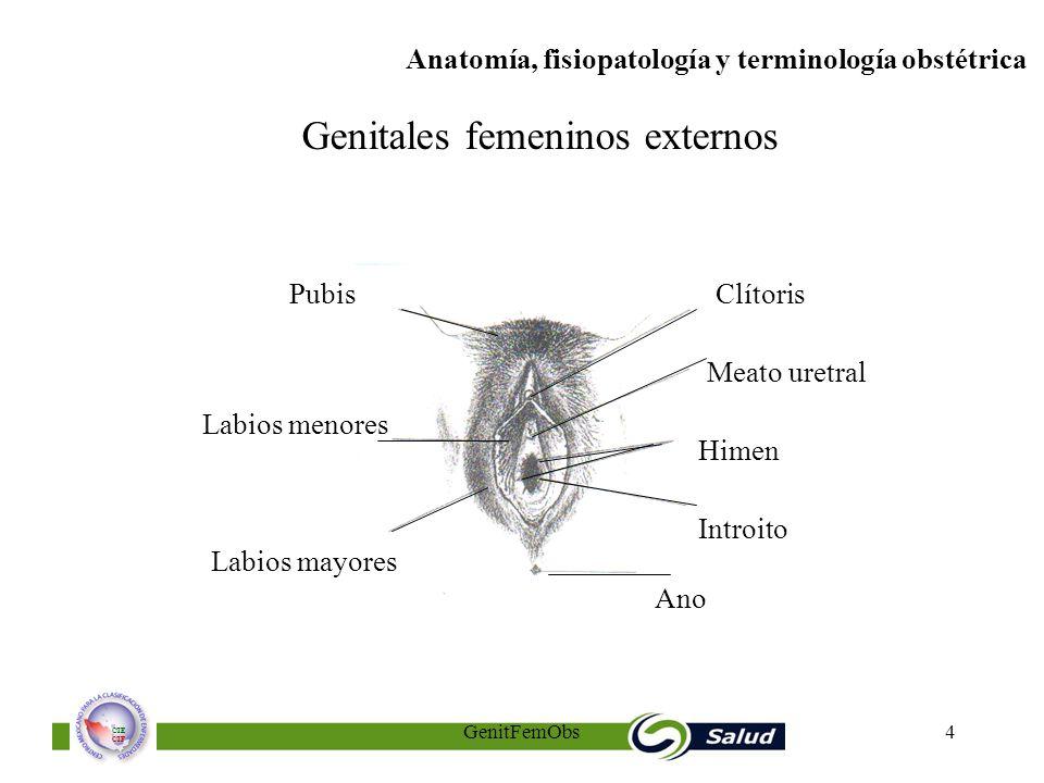 El aparato genital femenino y cambios anatómicos y funcionales ...