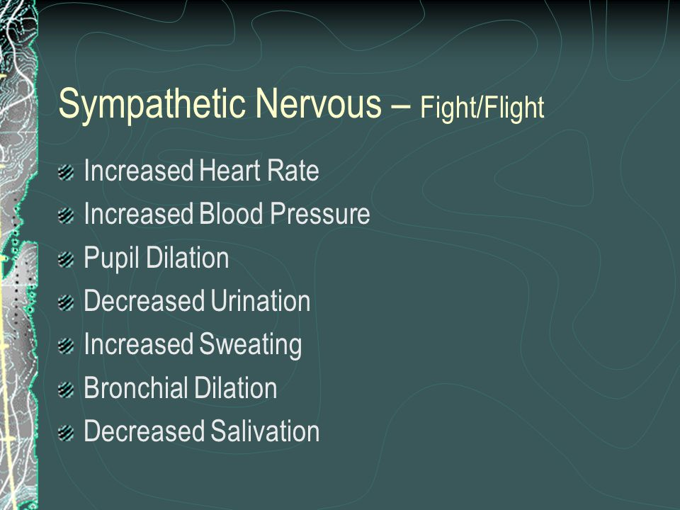 Sympathetic Nervous – Fight/Flight