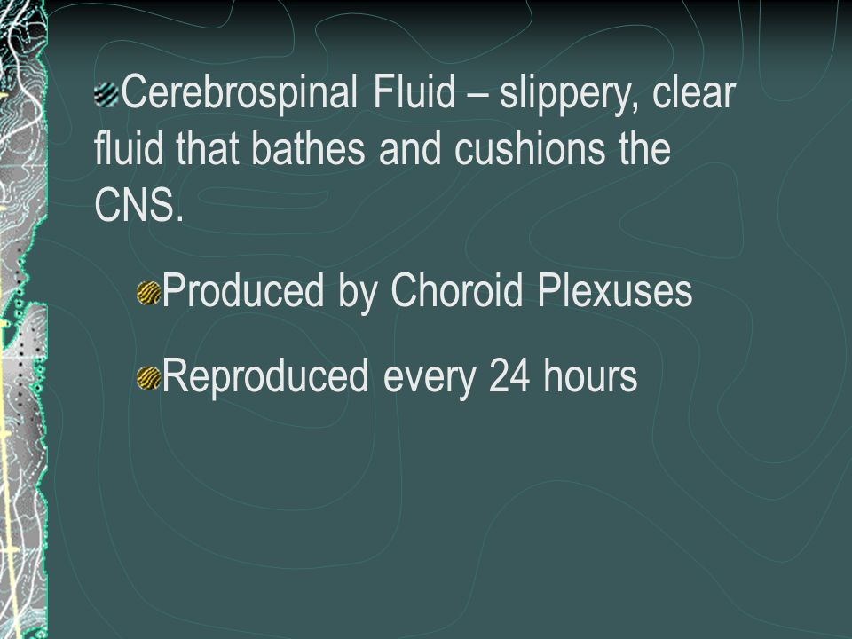 Cerebrospinal Fluid – slippery, clear fluid that bathes and cushions the CNS.