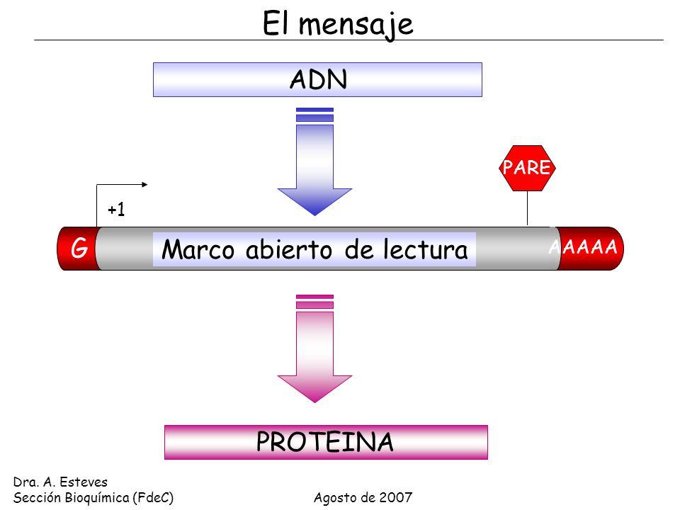 CÓDIGO GENÉTICO Y TRADUCCIÓN Dra. A. Esteves Sección Bioquímica ...