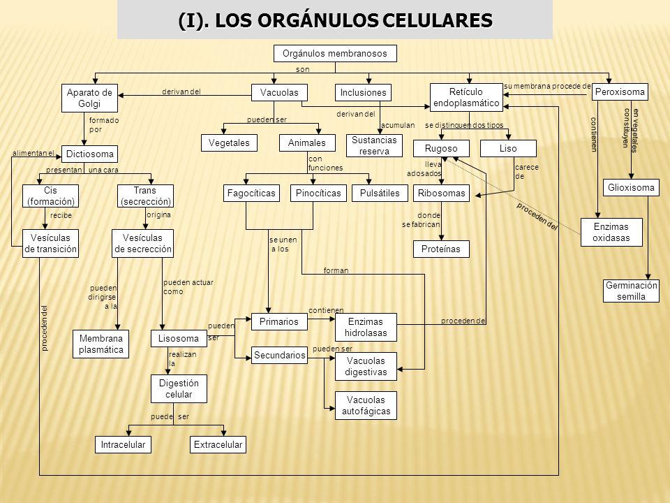 Mapas Conceptuales Adaptado Por Carlos Enrique Londoño