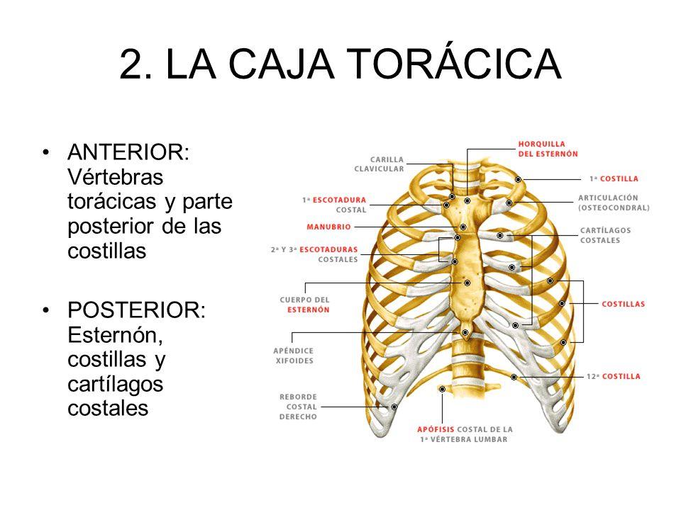 1. ANATOMÍA Gray (1840): Investigación de la estructura
