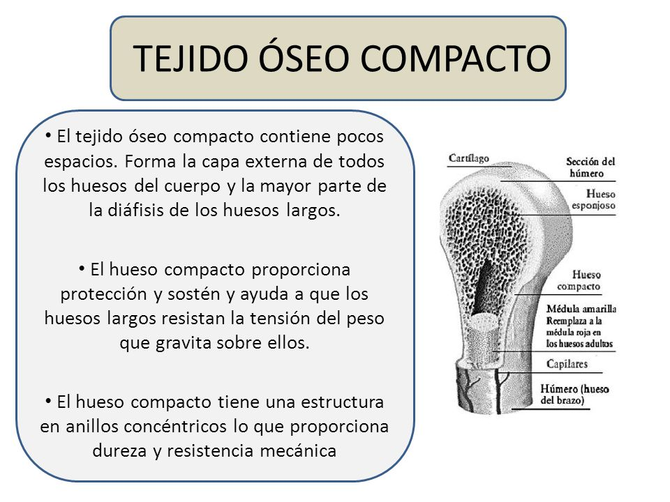 Tejidos Biológicos: Clasificación, estructura y función TOMADO DE ...