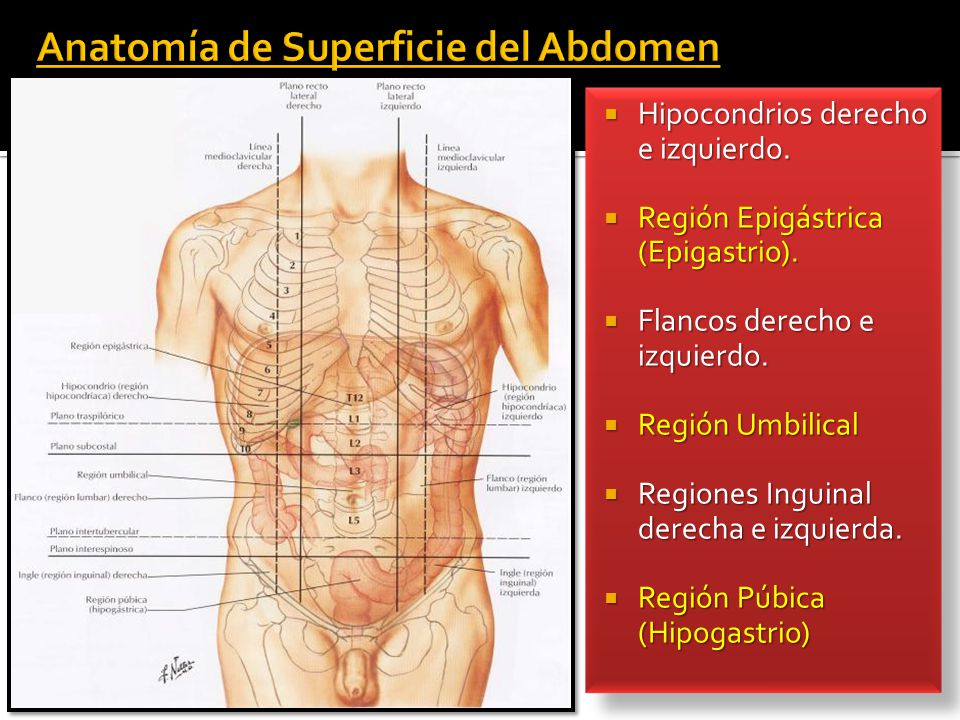 Excepcional Anatomía Derecha Del Abdomen Ornamento - Anatomía de Las ...