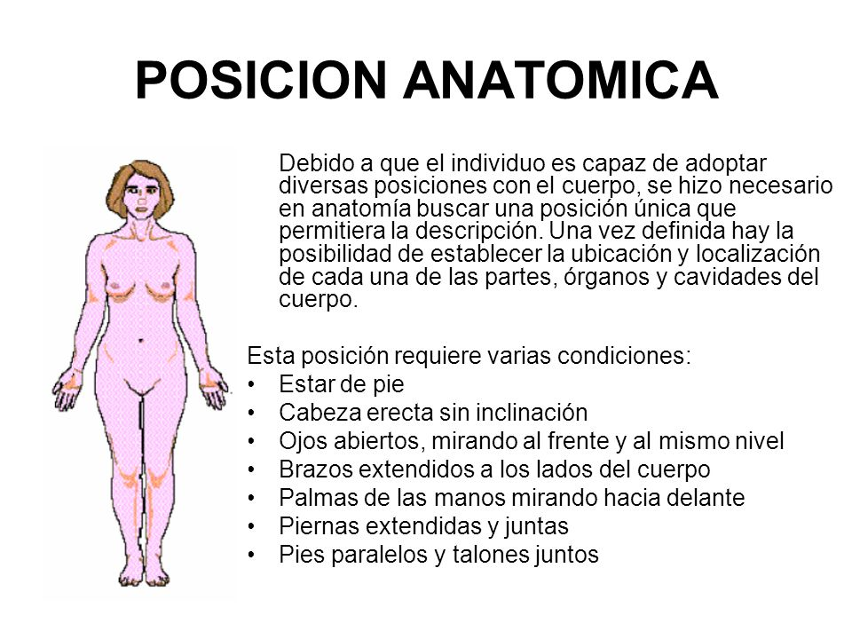 Nomenclatura anatómica - ppt video online descargar