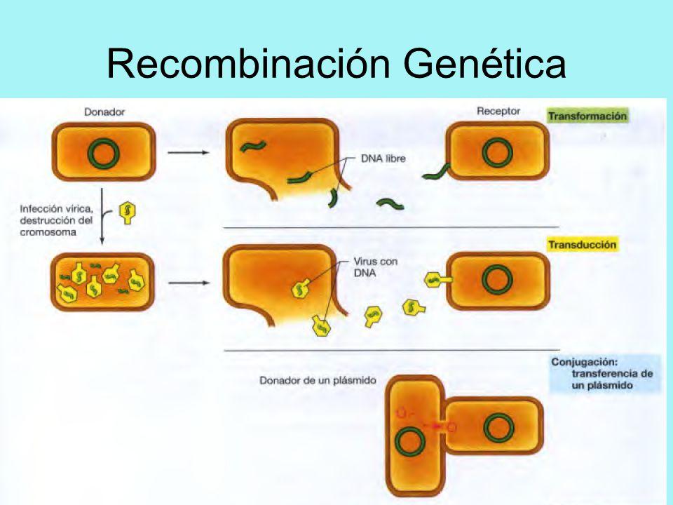 13 la genética mendeliana. Ppt descargar.