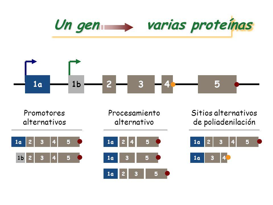 Introducción a la Genética Médica - ppt descargar