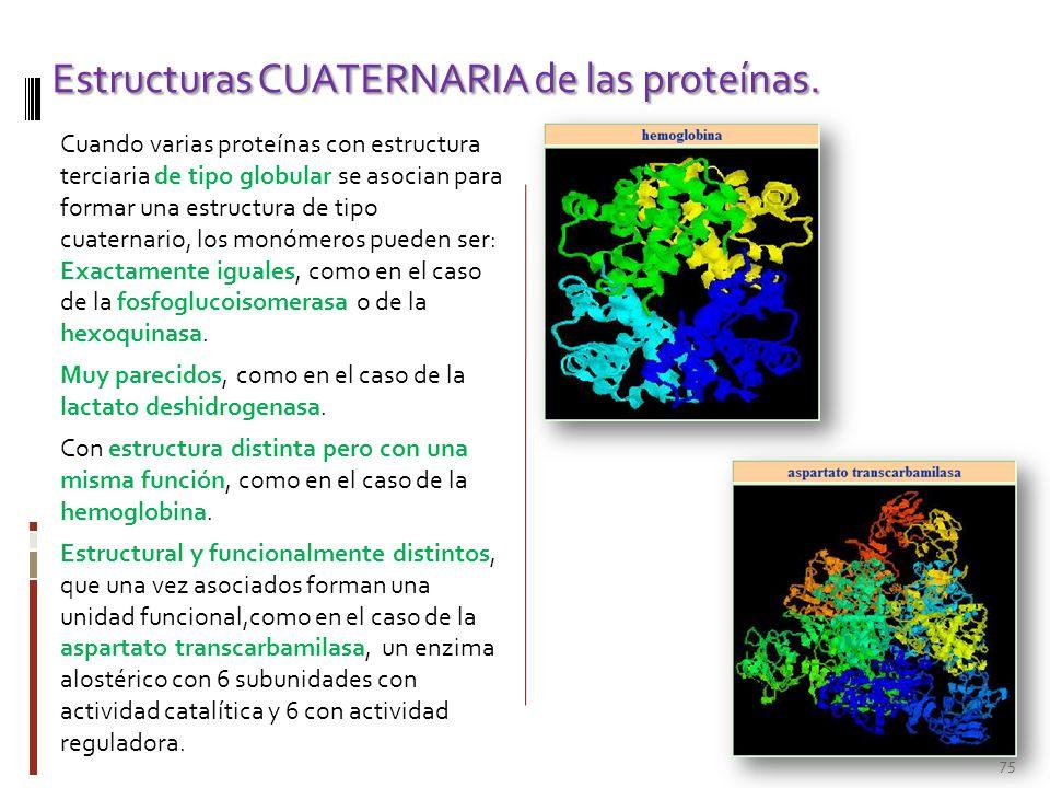 Bioquímica Estructural Las Proteínas Ppt Descargar