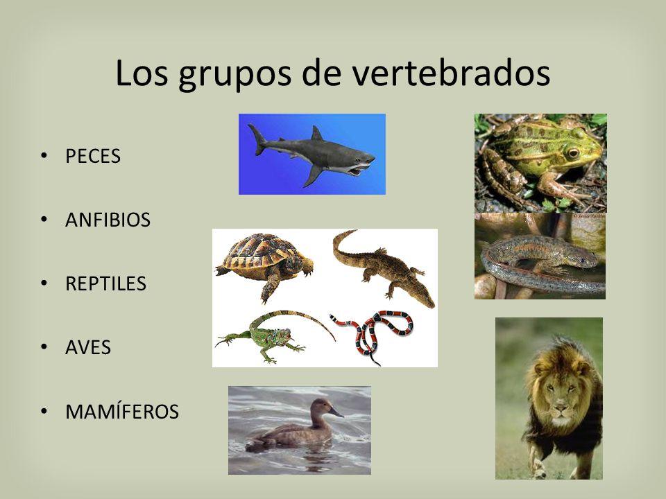 Unidad I. Los Vertebrados y su posición en el Reino Animal ...