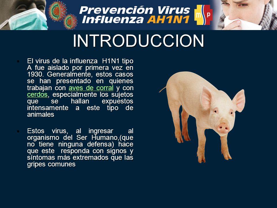 enfermedades de cerdos a humanos
