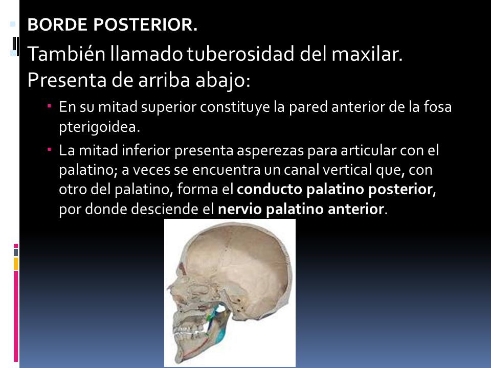 HUESOS DE LA CARA Anato iii. - ppt video online descargar