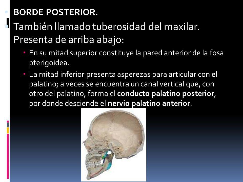 HUESOS DE LA CARA Anato iii. - ppt video online descargar